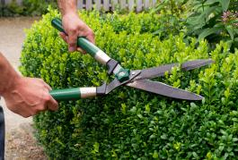 R ussir entretenir son jardin travaux for Cout haie jardin